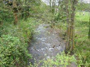 Entorno del río Magdalena